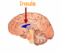 insula and the brain