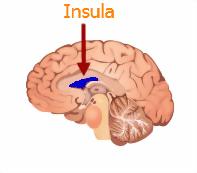 insula and the brain