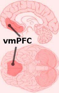 vmPFC of Brain