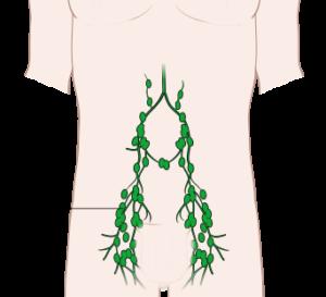Lymph nodes abdominal